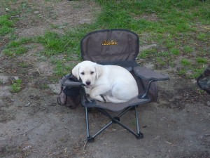 Camping Puppy